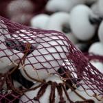El barrio pesquero de Santander