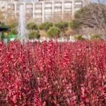 Parque de Santander: Lo que queda del Otoño