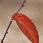 De las últimas del otoño