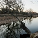 El Pardo: Naturaleza y capital de la mano