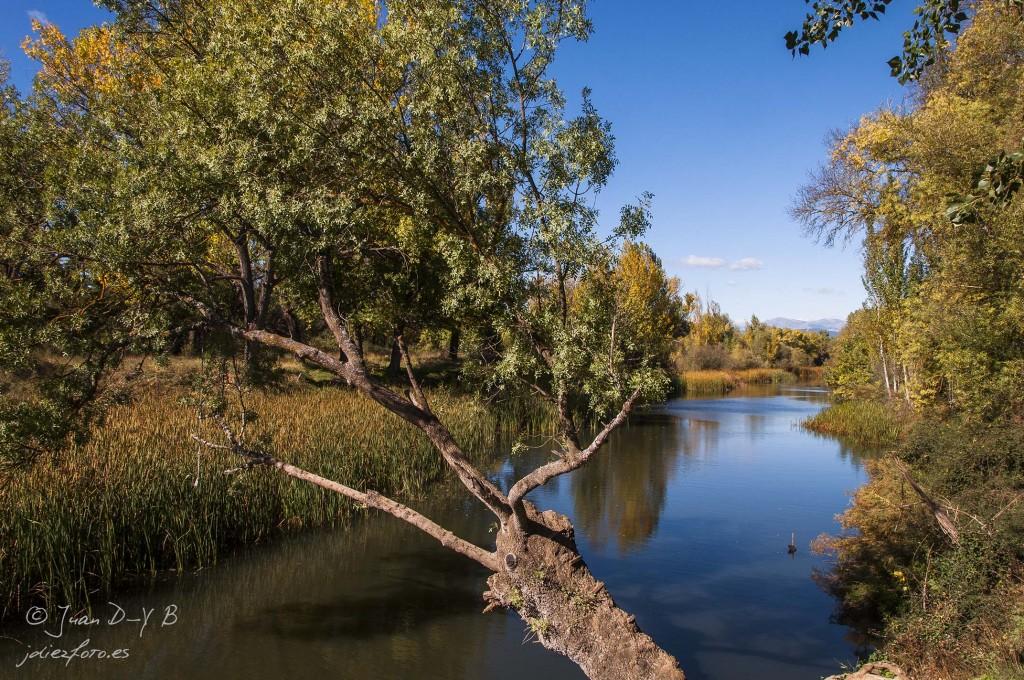Manzanares a su paso por El Pardo