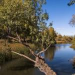Los colores otoñales en el Río Manzanares a su paso por El Pardo