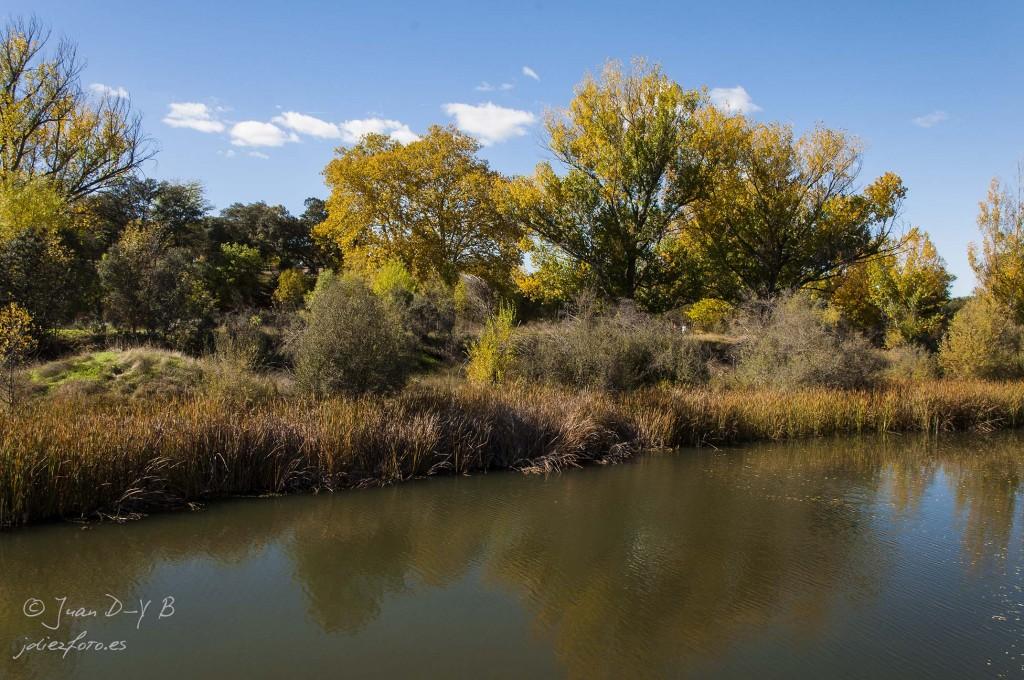 contrastes otoñales sobre el río manzanares en el pardo
