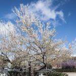 Es primavera en la Ciudad Universitaria