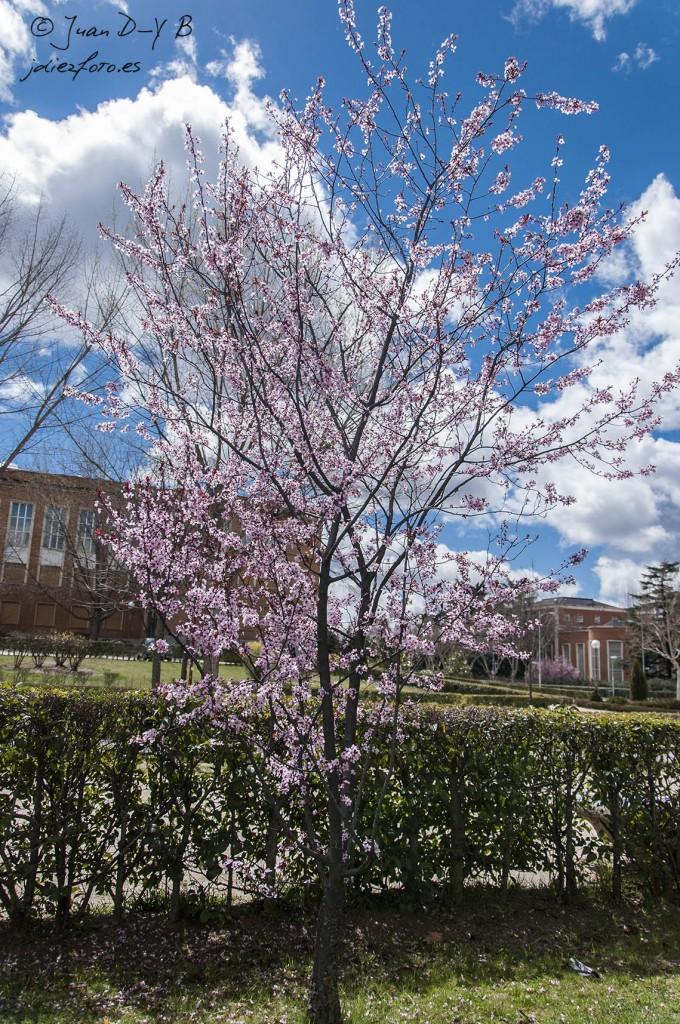 Árboles de la ciudad universitaria en primavera