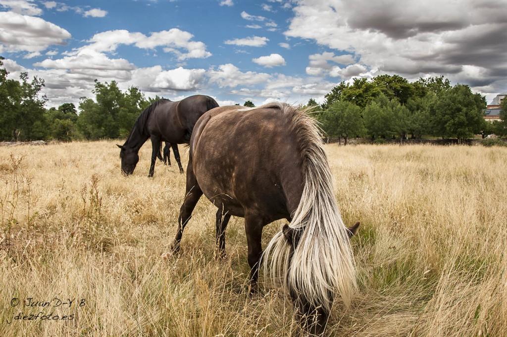 Pony en las Navas de Riofrío