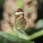 El Mariposario del Zoo de Santillana del Mar cumple 25 años
