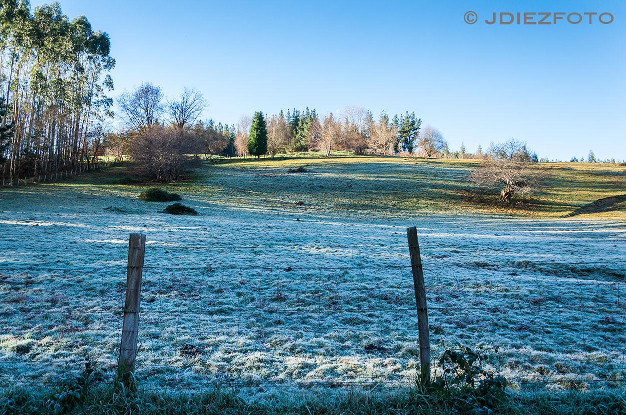 Rocio al amanecer en los pastos de Barcenillas