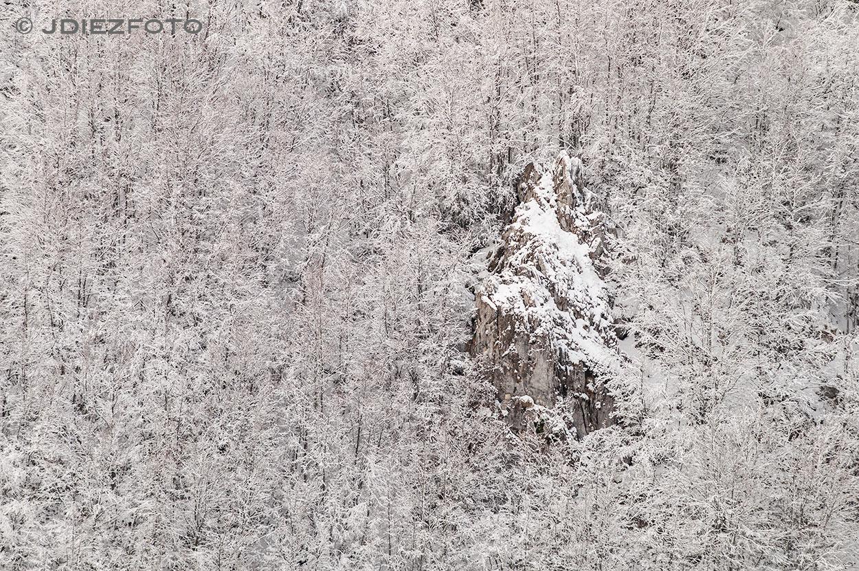 Detalles del bosque nevado en Sotres