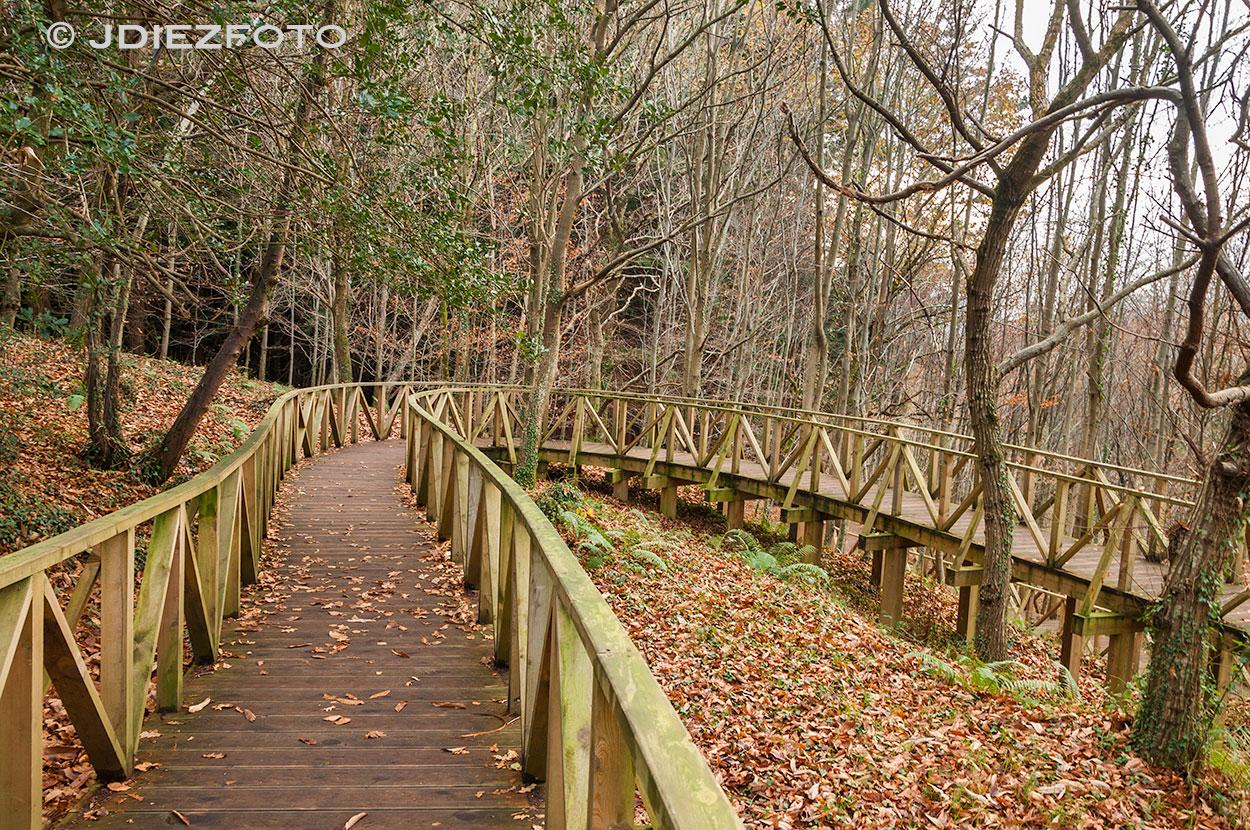 Camino al bosque de secuoyas