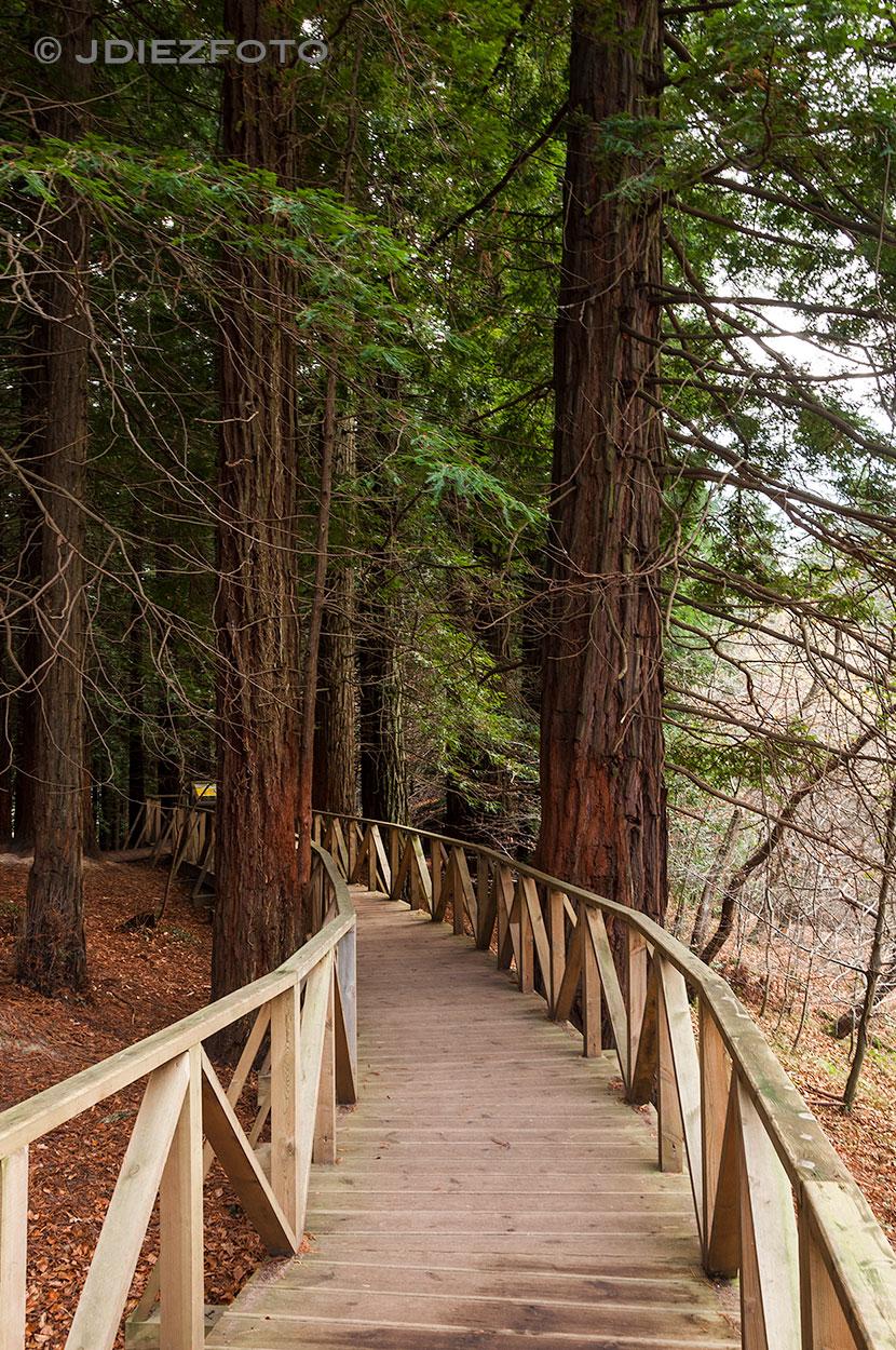 Entrada al bosque de secuoyas