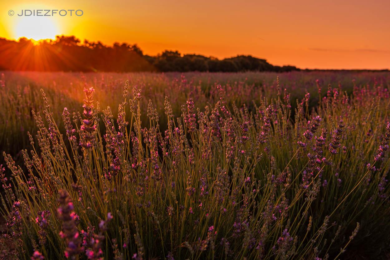 Puesta de sol. Campos de Lavanda Brihuega
