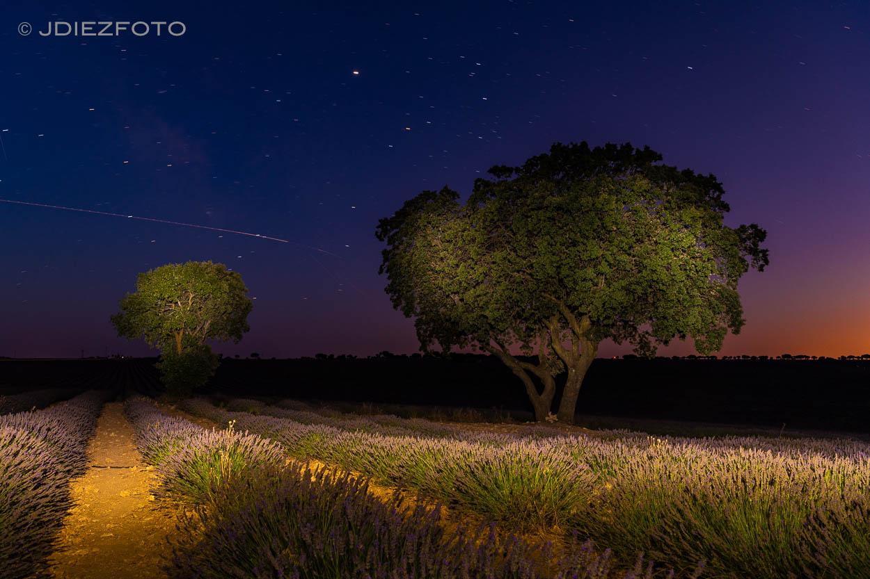 Nocturna. Campos de Lavanda Brihuega