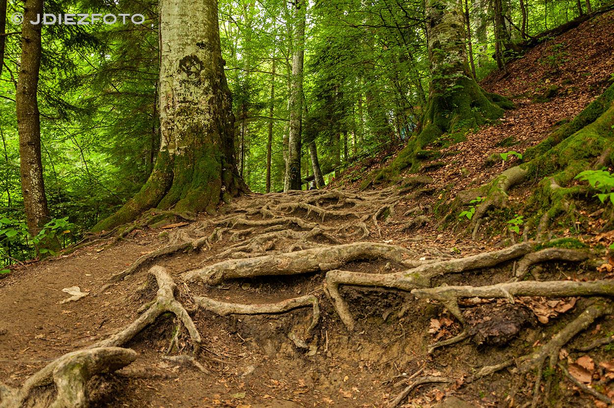 Ruta Cascada Urlatoarea