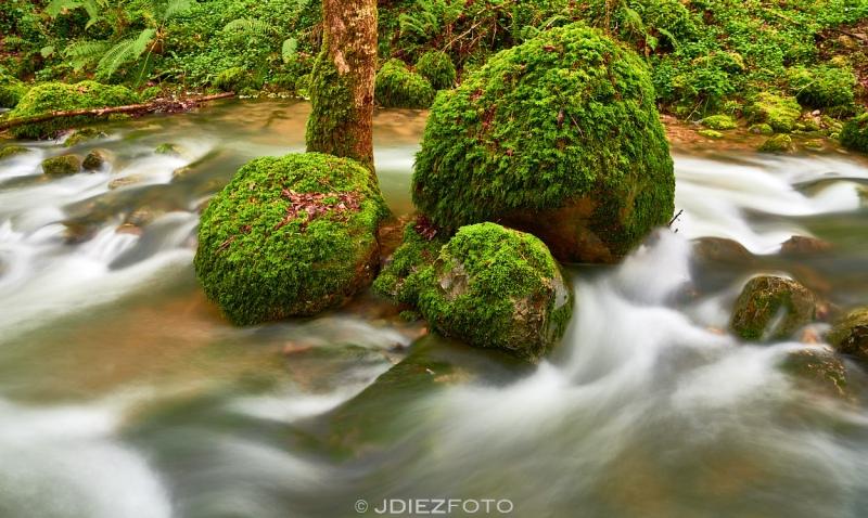 Arroyo de la Llana en Borleña
