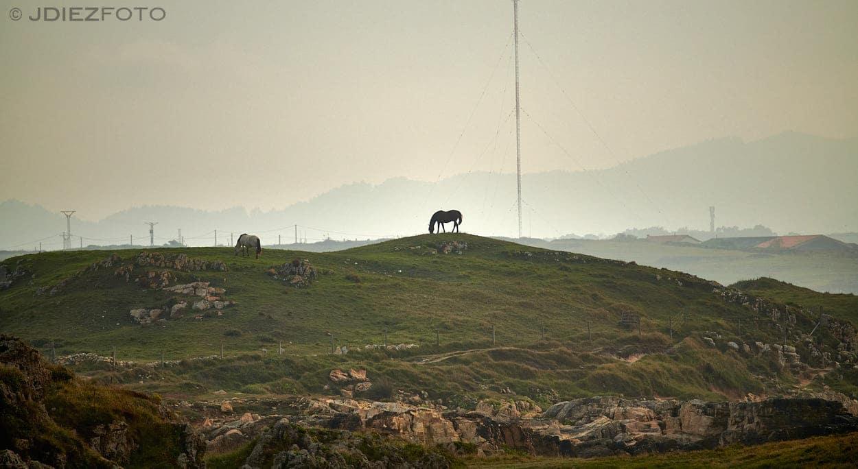 Caballo en la costa de Cueto