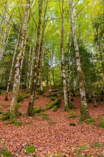 Colores del otoño. Selva de Irati