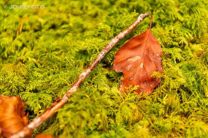 Hojas del otoño