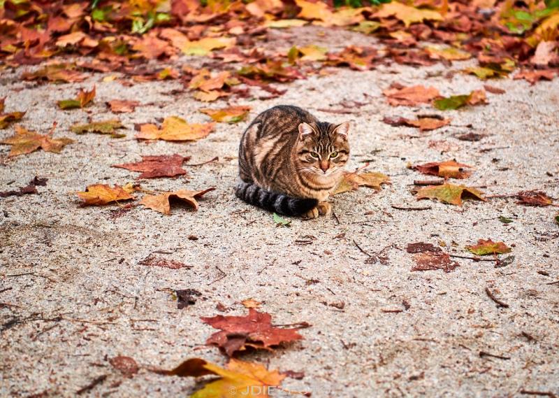 Gato en el Parque del Retiro