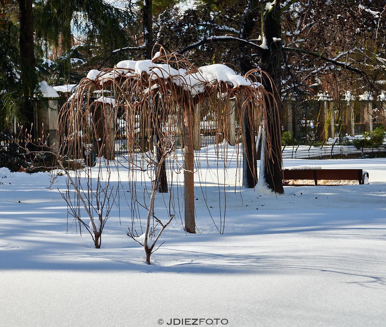 Filomena cubre de nieve el Parque del Retiro