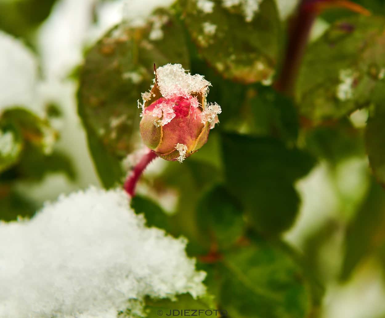 Rosaleda del Retiro Nevando