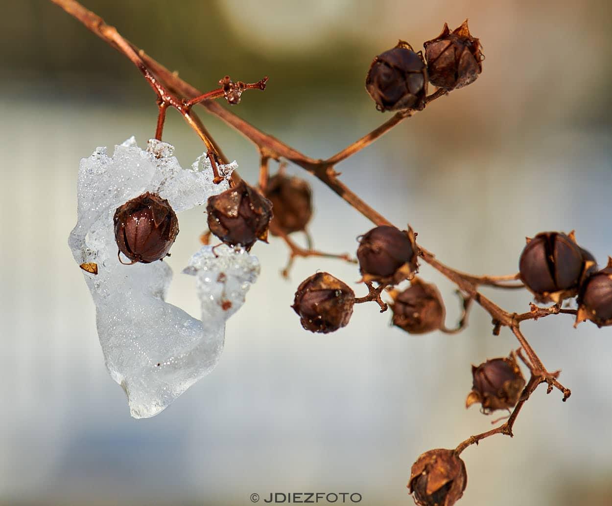 Los detalles que deja la nieve en las ramas del Parque del Retiro