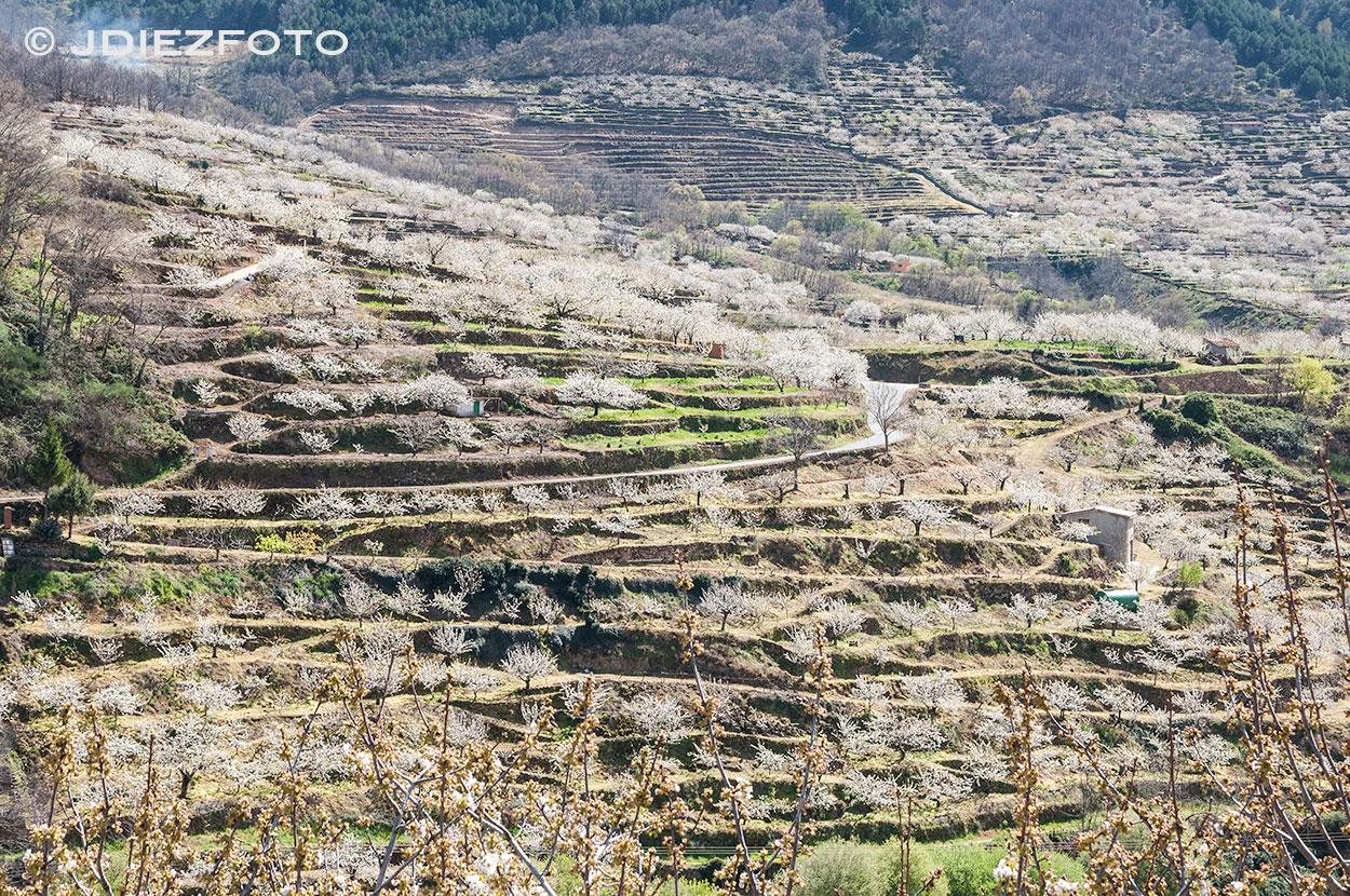 Terrazas en la floración de los cerezos Valle del Jerte