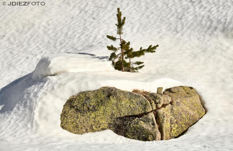 Detalles del paisaje nevado en el Valle de Monestero