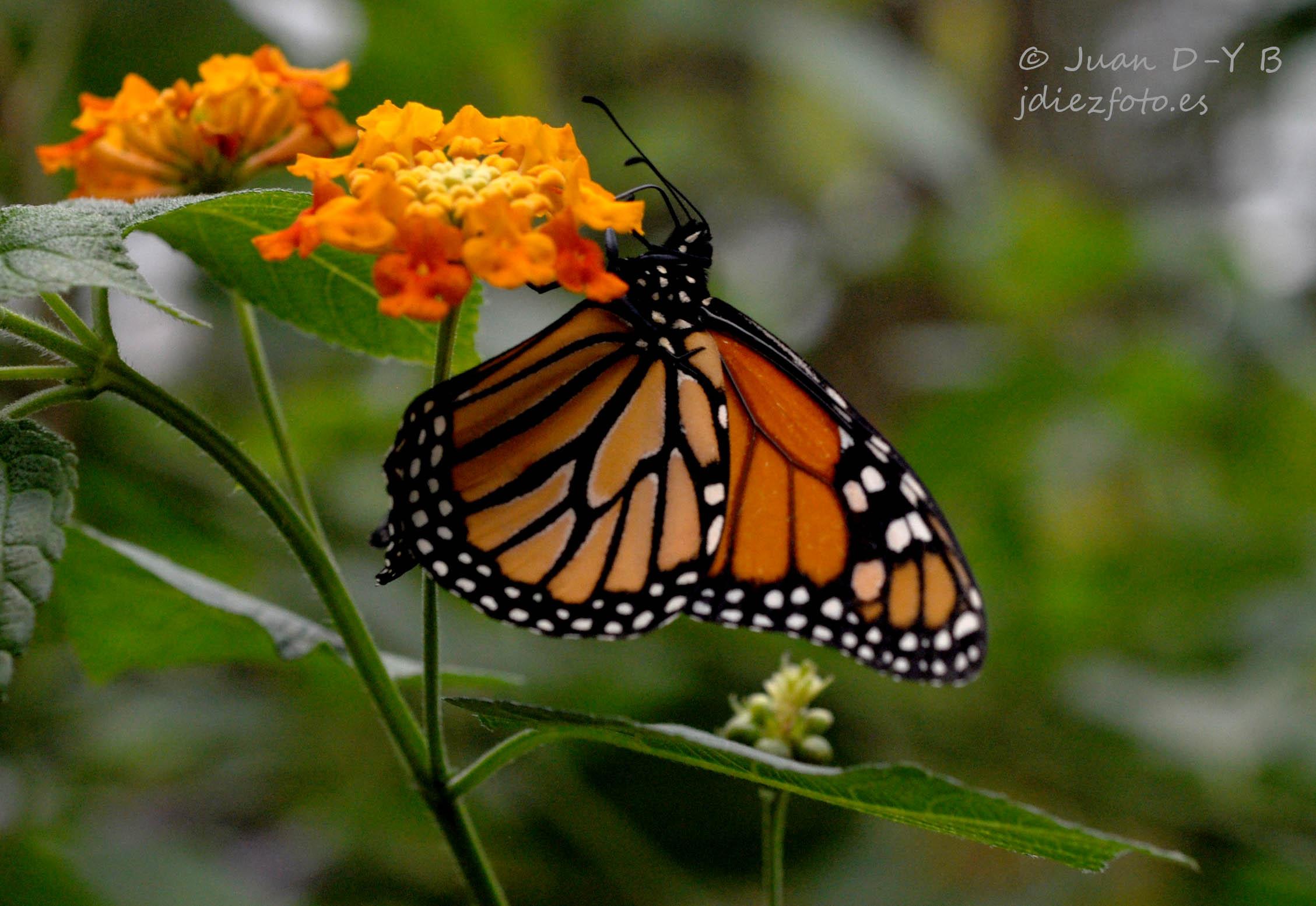 Mariposa en el Zoo de Santillana del Mar