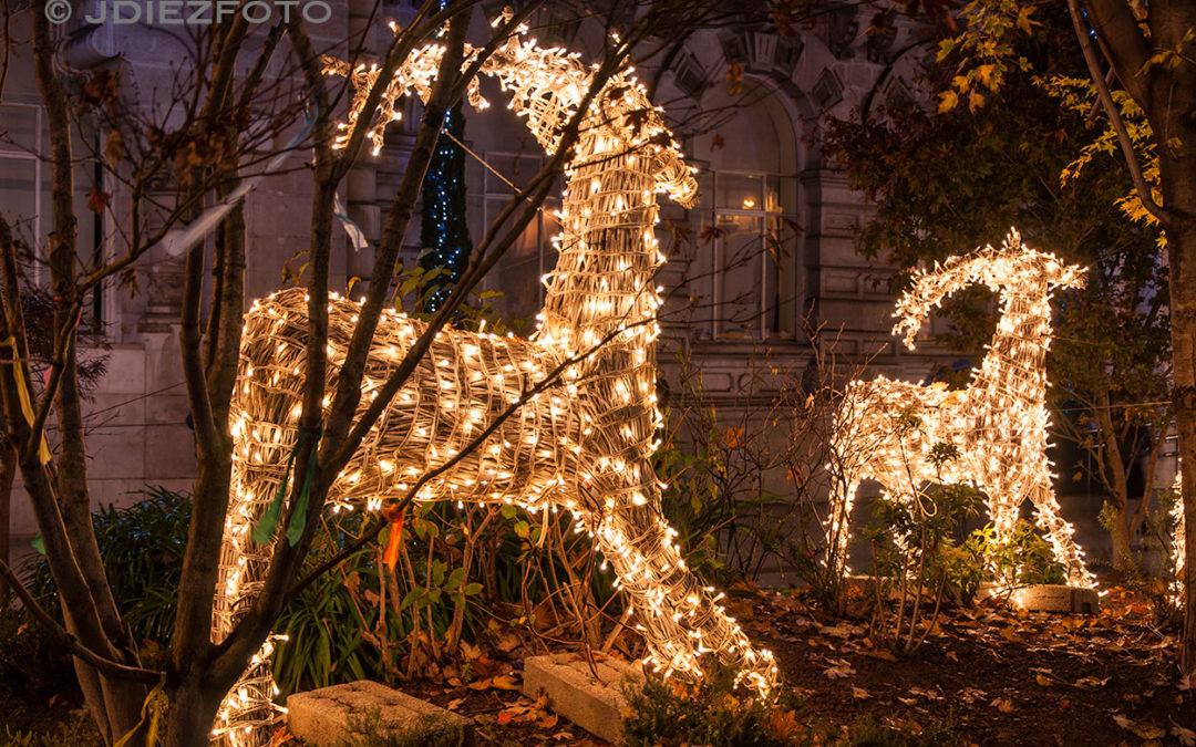 La Navidad llena de luz las calles de Santander