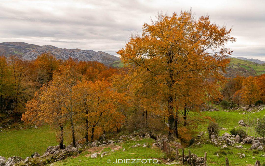 Escenas de otoño en el Puerto de Alisas