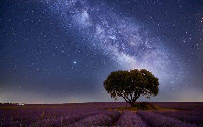 Vía Láctea en los campos de lavanda de Brihuega